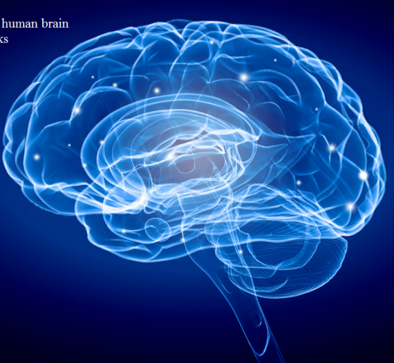 Facts about the human brain and how it works